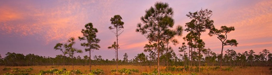 Camp Everglades