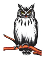 Gokhos Chapter Owl